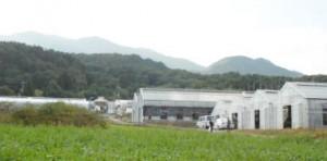 山梨農場-1